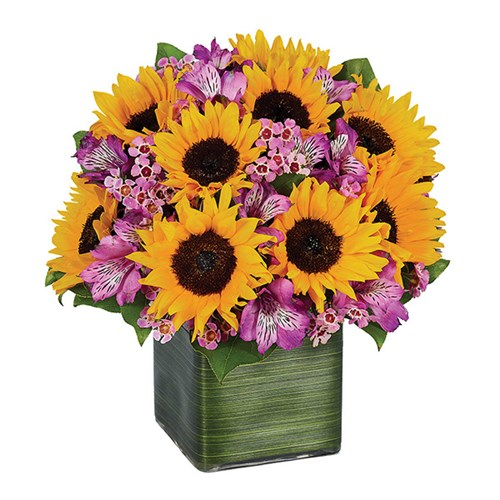 Sunflower Melody (BF256-11)